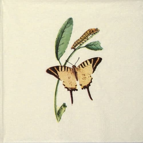 Lunch Napkins (20) - Nature Butterfly