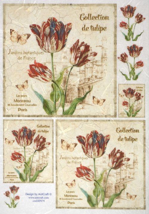 Rice Paper - Collection de Tulipe