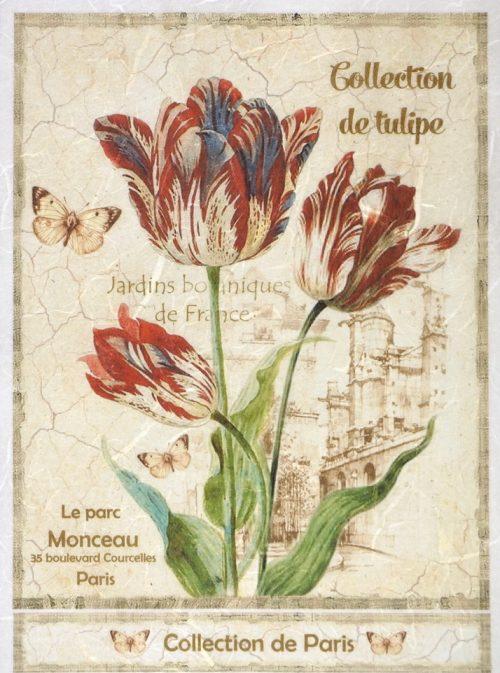 Rice Paper - Collection de Tulipe Large