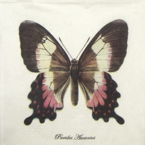 Lunch Napkins (20) - Butterflies