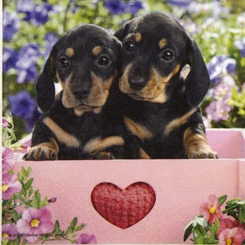 Paper Napkin - Dachshund Puppies