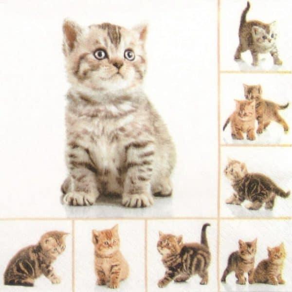 Paper Napkin - Meow