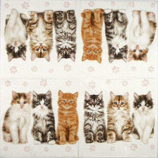Lunch Napkins (20) - Three beautiful cats