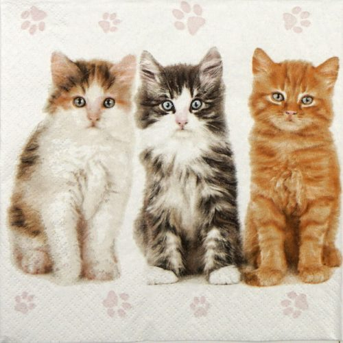 Lunch Napkins (20) - Three beautiful cats