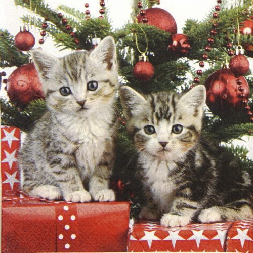 Cocktail Napkins (20) - Christmas Kitten