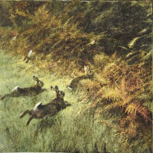 Lunch Napkins (20) - Running Rabbits