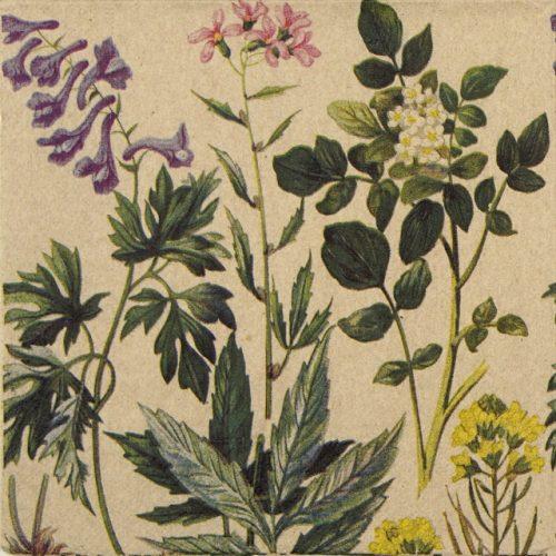 Paper Napkin - Botanical pattern