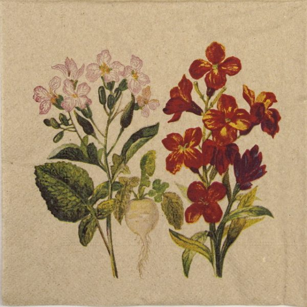Lunch Napkins (20) - Botanical