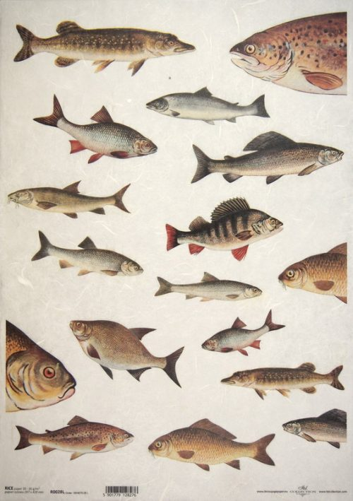 Rice Paper A/3 - Fish collection