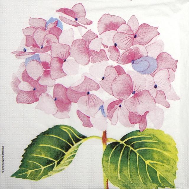 Paper Napkin - Brigitte Murat: Hydrangea  rosé
