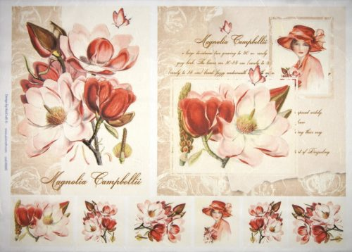 Rice Paper - Magnolia Campbelli