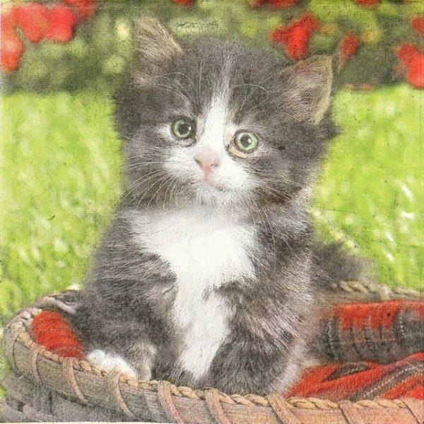 Paper Napkin - Cat in the Basket