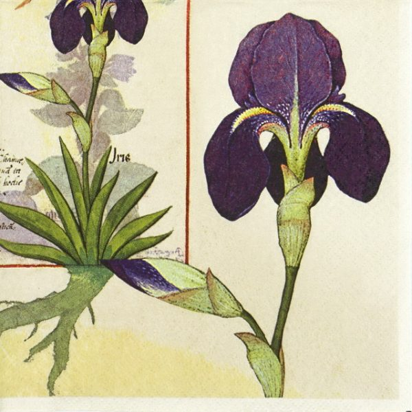 Lunch Napkins (20) - Orchid and Fumitory