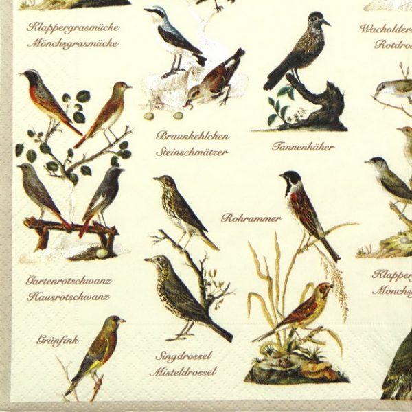 Lunch Napkins (20) - Garden Birds