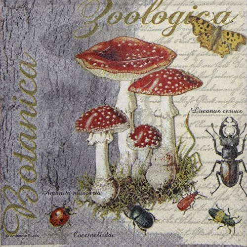 Cocktail Napkin - Fly Agaric and Beetle