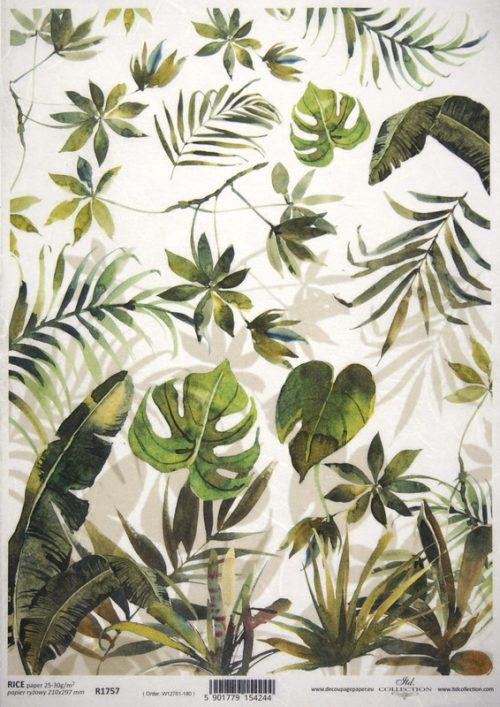Rice Paper - Palm