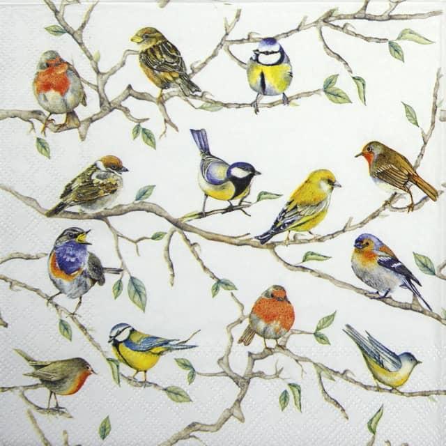 Cocktail Napkins (20) - Birds Meeting
