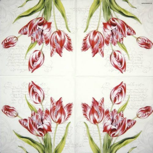 Cocktail Napkins (20) - Classic Tulips