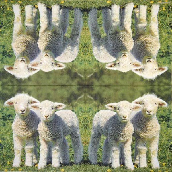 Paper Napkin - Two Lambs