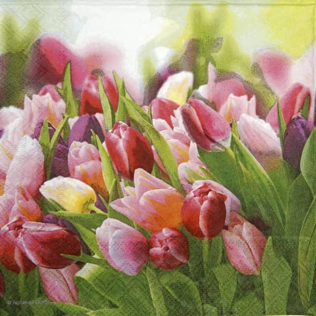 Paper Napkin - Glorious Tulips