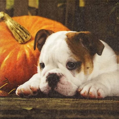 Paper Napkin - Autumn Dog