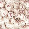 Paper Napkin - Pastel Roses