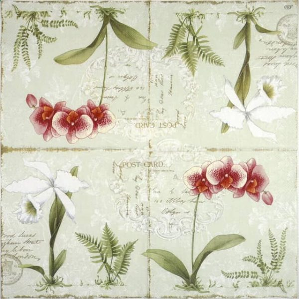 Lunch Napkins (20) -  L'Orchidée Light green