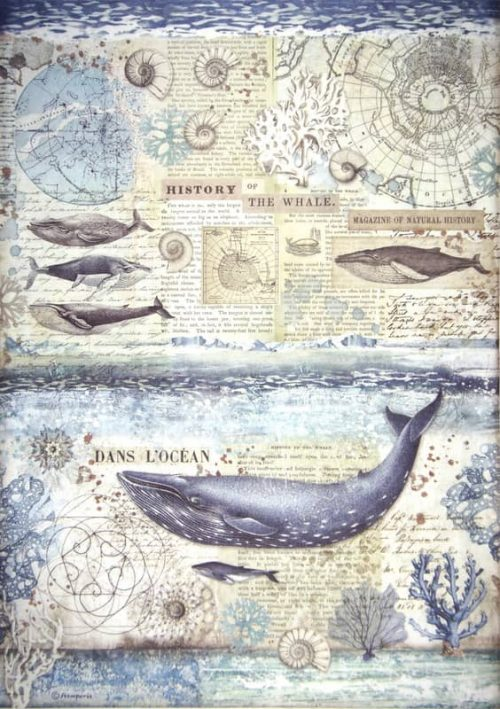 Rice Paper - History of the whale