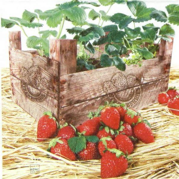 Paper Napkin - Strawberry Case