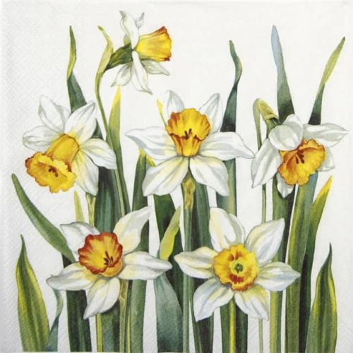 Lunch Napkins (20) - White Narcissus white