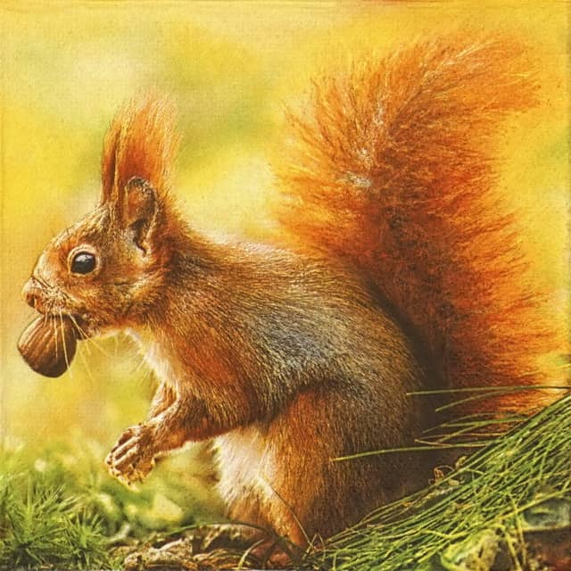 Paper Napkin - Red Squirrel