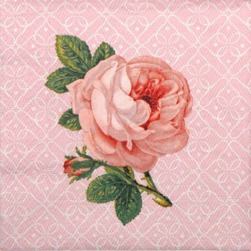 Lunch Napkins (20) -  Portrait of Rose
