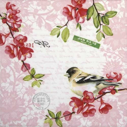 Cocktail Napkins (20) - Sweet bird