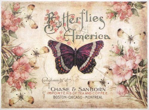 Rice Paper - America Butterflies-
