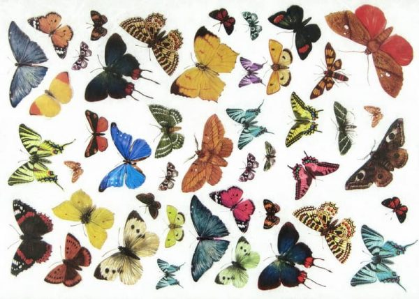 Rice Paper - Butterfly World