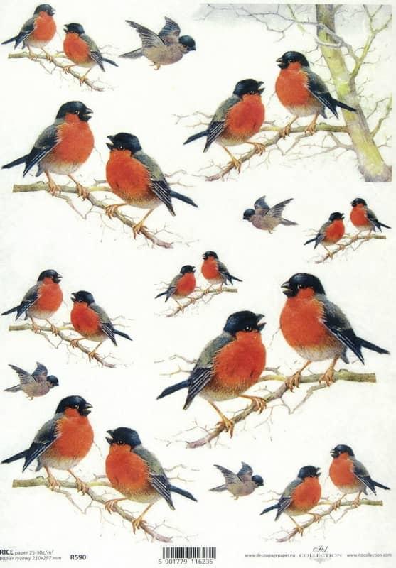 Rice Paper - Robin
