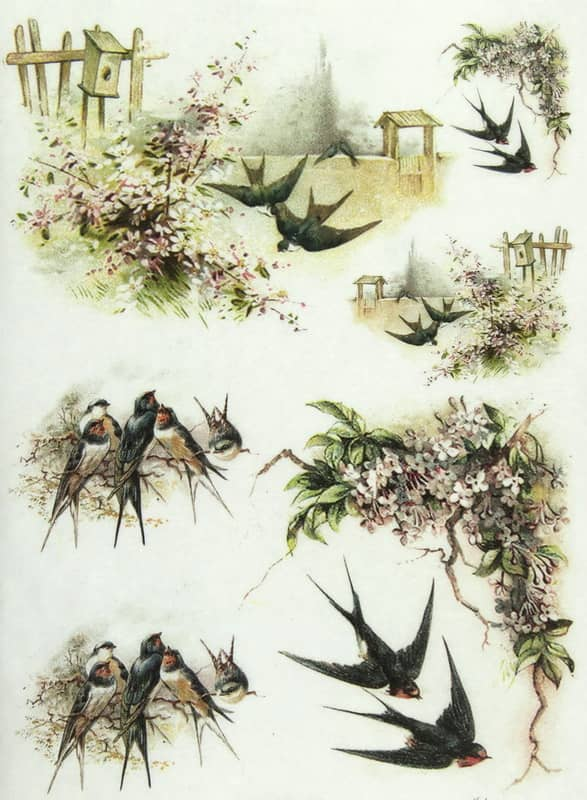 Rice Paper - Swallow Family-
