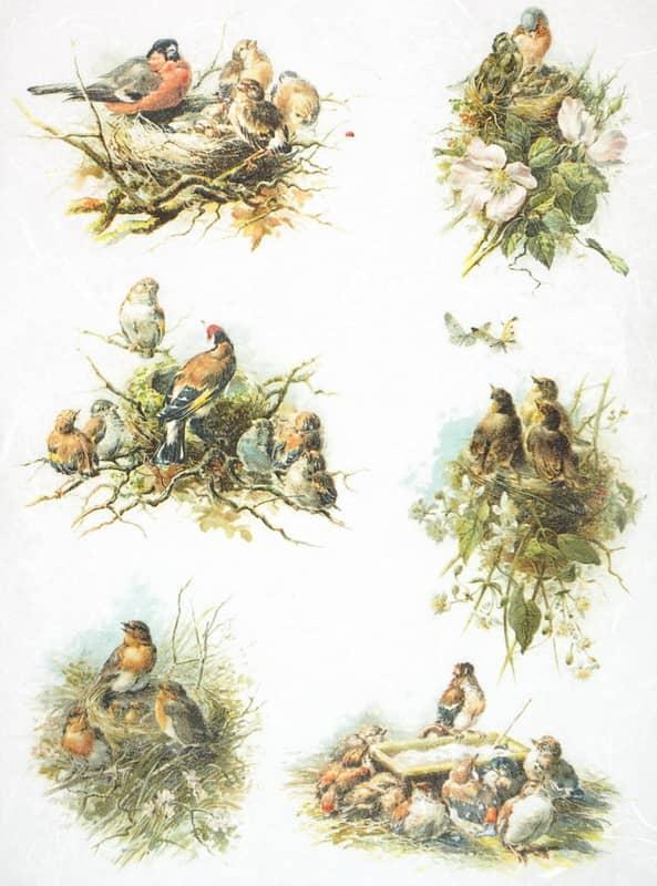 Rice Paper - Bird's Nest