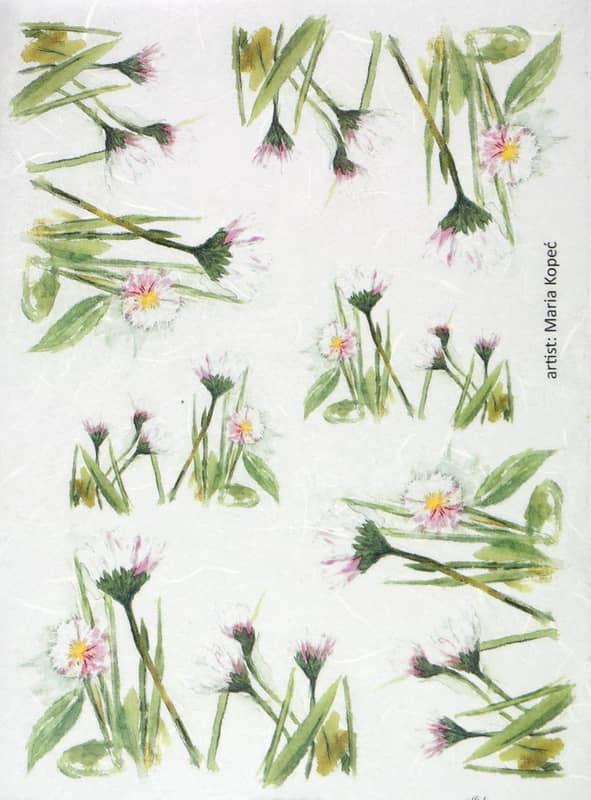 Rice Paper - Painted Flower Bellis