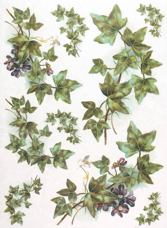 Rice Paper - Vintage Ivy large