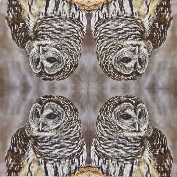 Lunch Napkins (20) - Barred Pattern Owl