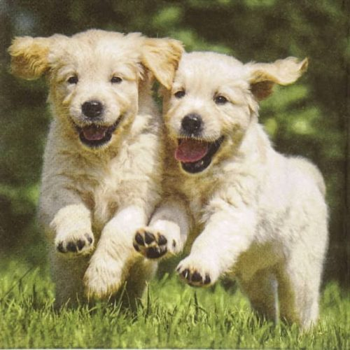 Paper Napkin - Happy Puppies