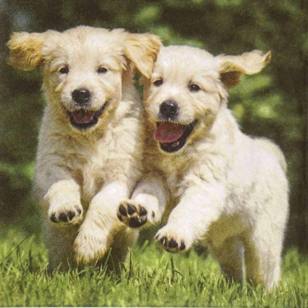 Paper Napkin - Happy Puppies