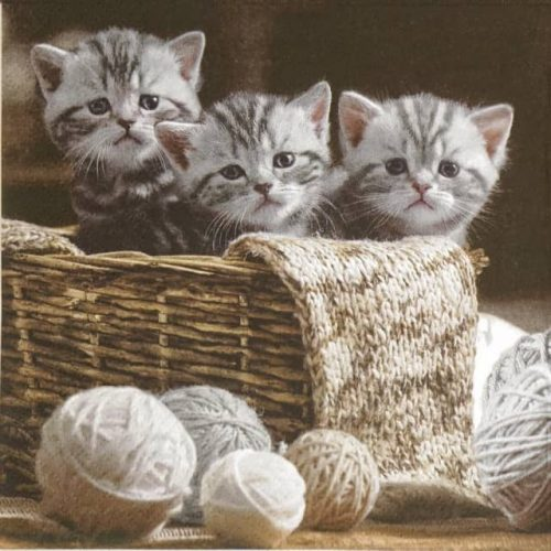 Paper Napkin - Striped Kittens