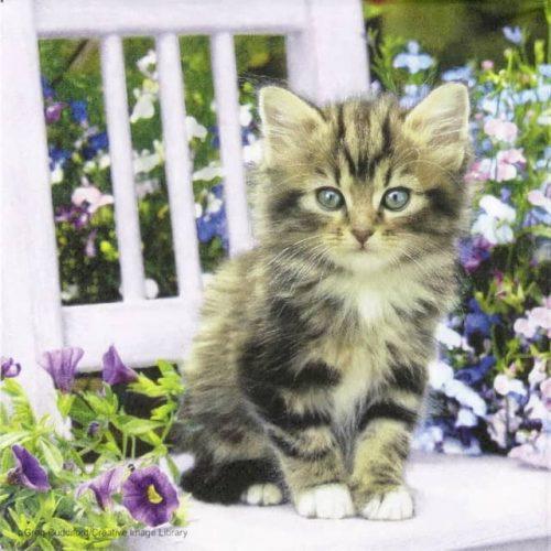 Paper Napkin - Kitty