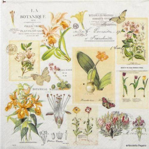 Paper Napkin - Botanique