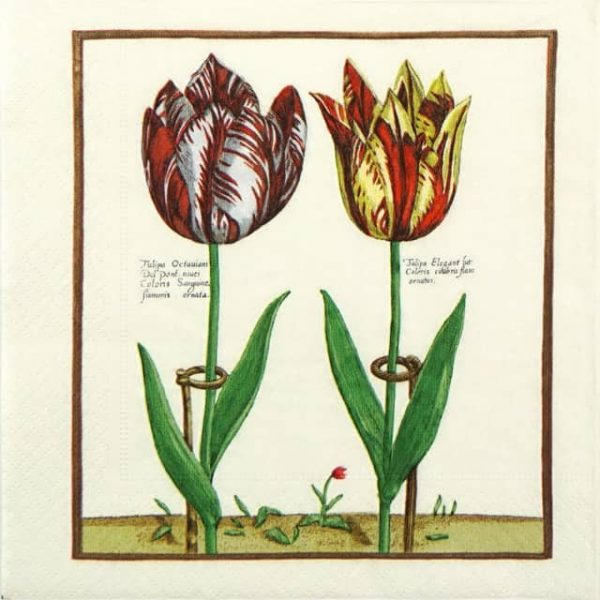 Lunch Napkins (20) - Elegance Tulip