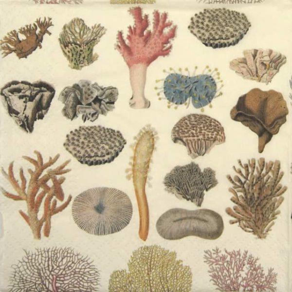 Paper Napkin - Corals
