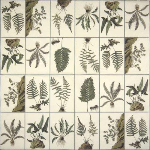 Paper Napkin - Ferns