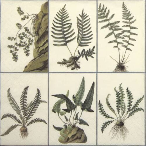 Lunch Napkins (20) - Ferns